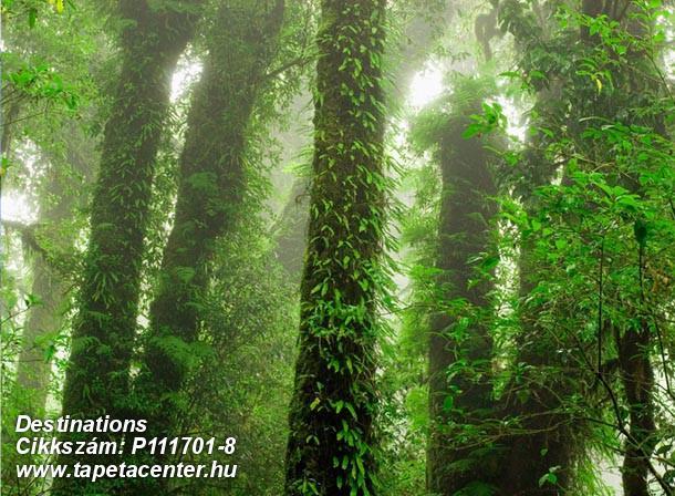 Fa hatású-fa mintás,fotórealisztikus,gyerek,különleges motívumos,retro,tájkép,természeti mintás,barna,fehér,zöld,gyengén mosható,vlies poszter, fotótapéta