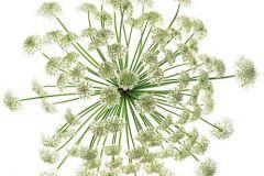 3d hatású,fotórealisztikus,különleges motívumos,természeti mintás,virágmintás,fehér,zöld,gyengén mosható,vlies poszter, fotótapéta