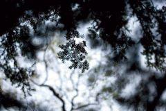 3d hatású,fa hatású-fa mintás,természeti mintás,fehér,szürke,zöld,gyengén mosható,vlies poszter, fotótapéta