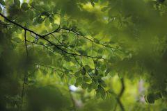 3d hatású,fotórealisztikus,természeti mintás,zöld,gyengén mosható,vlies poszter, fotótapéta
