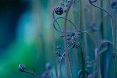 3d hatású,fotórealisztikus,különleges motívumos,természeti mintás,virágmintás,kék,lila,zöld,gyengén mosható,vlies poszter, fotótapéta