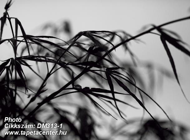 3d hatású,fotórealisztikus,természeti mintás,fehér,fekete,szürke,gyengén mosható,vlies poszter, fotótapéta