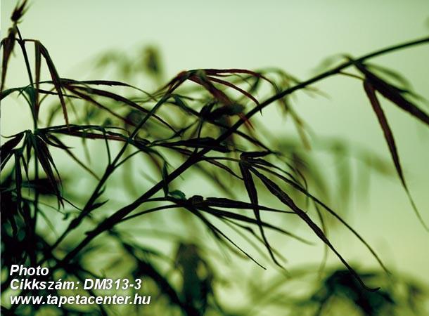 3d hatású,fotórealisztikus,természeti mintás,fekete,zöld,gyengén mosható,vlies poszter, fotótapéta