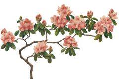 Különleges motívumos,rajzolt,retro,természeti mintás,virágmintás,fehér,pink-rózsaszín,zöld,gyengén mosható,vlies poszter, fotótapéta